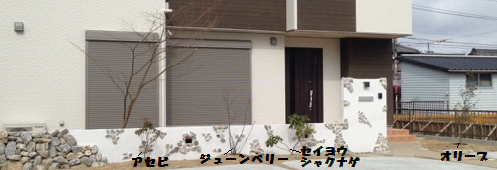 正面(植物)文字4