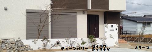 正面(植物)文字3