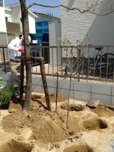 多治見 庭 植栽