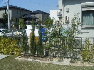 ガーデニング 植栽