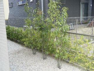 植木 植栽