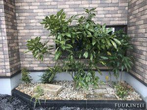 和室前植栽